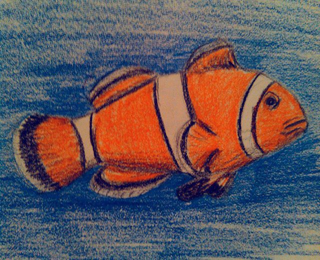 Clownfish in Colored Pencils