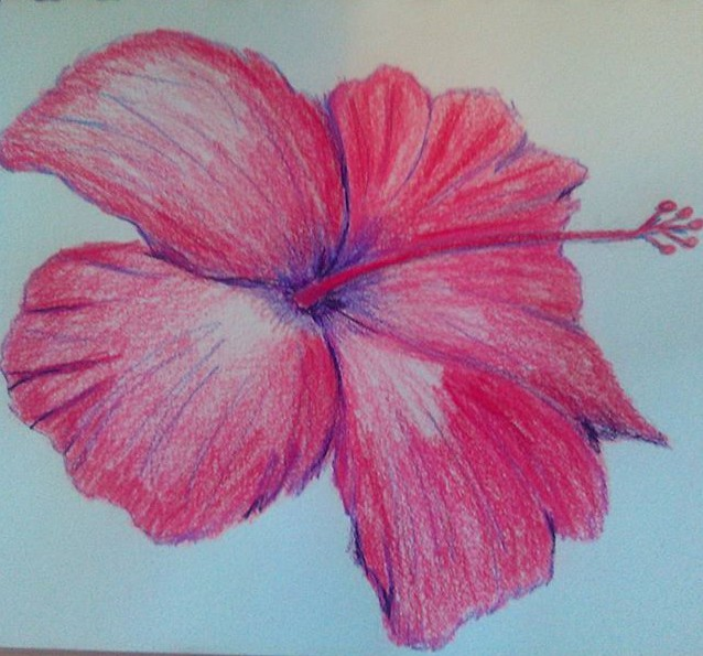 Hibiscus in Colored Pencils